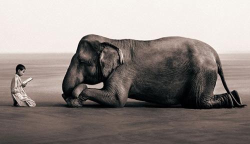 gregory colbert, image, человек, слон