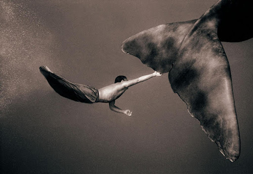 кит, человек, gregory colbert, image